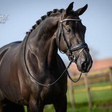 Floridansa-1-paard-verkocht-lizz-kok