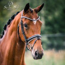 Gwensie-1-paard-op-stal-lizz-kok