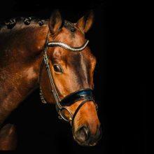 Indesign-1-paard-verkocht-lizz-kok