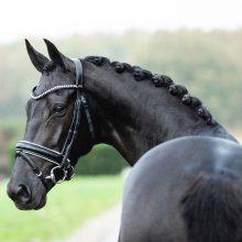 Kick-of-Rouss-paard-verkocht-lizz-kok