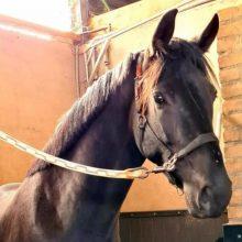 My-dream-1-paard-op-stal-lizz-kok