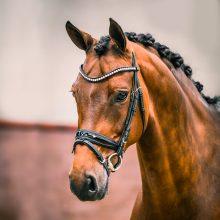 Santi-s-Charm-1-paard-verkocht-lizz-kok
