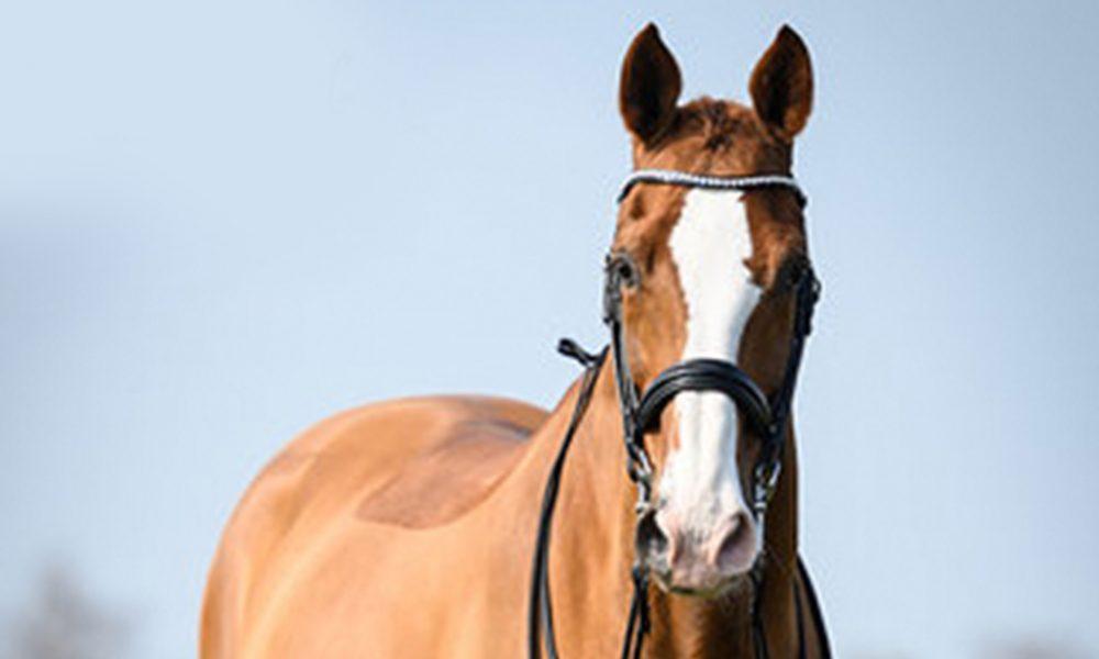 Undercover-1-paard-Lizz-Kok