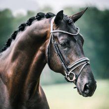 lets-dance-1-paard-op-stal-lizz-kok